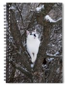 Felis Silvestris Catus In Winter Spiral Notebook