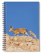 female and young Nubian Ibex Spiral Notebook