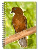 Female Andean Cock-of-the-rock Spiral Notebook