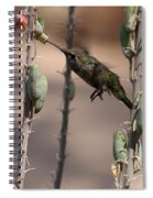 Female Anna's Hummingbird Spiral Notebook