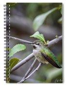 Female Anna's Hummingbird Spiral Notebook