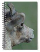 Female Bighorn Spiral Notebook