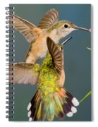 Female Broad-tailed Hummingbird Spiral Notebook