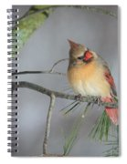 Female Cardinal Spiral Notebook
