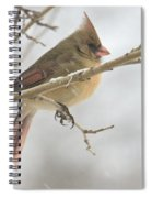 Female Cardinal In Snow 02 Spiral Notebook