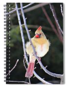 Female Cardinal In Tree Spiral Notebook