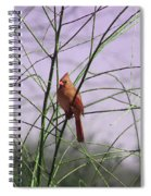 Female Cardinal In Willow Spiral Notebook