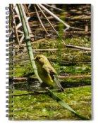 Female Gold Finch Drinking Spiral Notebook