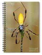 Female Golden Silk Spider Eating Spiral Notebook