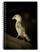 Female House Finch Spiral Notebook