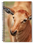 Female Impala Spiral Notebook