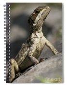 Female Jesus Lizard Spiral Notebook