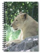 Female Lion On Guard Spiral Notebook