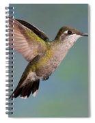 Female Magnificent Hummingbird At Flower Spiral Notebook
