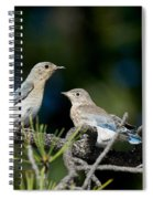 Female Mountain Bluebird With Fledgling Spiral Notebook