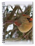 Female Northern Cardinal Spiral Notebook