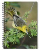 Female Orchard Oriole Spiral Notebook