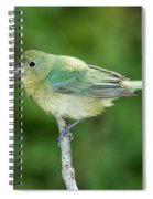 Female Painted Bunting Passerina Ciris Spiral Notebook