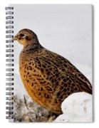 Female Pheasant Spiral Notebook