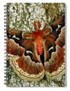 Female Promethea Moth Spiral Notebook