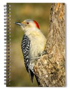Female Red-bellied Woodpecker Spiral Notebook