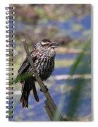 Female Red-winged Blackbird Spiral Notebook