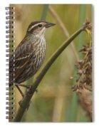 Female Redwing Blackbird Spiral Notebook