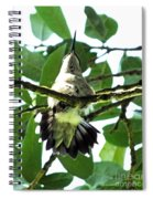 Female Ruby Throated Hummingbird Spiral Notebook