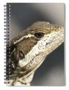 Female Striped Basilisk Spiral Notebook