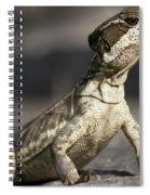 Female Striped Lizard Spiral Notebook