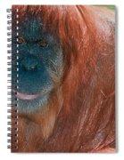 Female Sumatran Orangutan Spiral Notebook