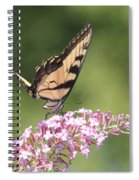 Female Tiger Butterly-1-featured In Macro-comfortable Art And Newbies Groups Spiral Notebook
