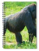 Female Western Lowland Gorilla Spiral Notebook