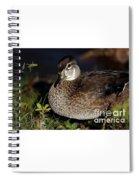 Female Woodduck Spiral Notebook