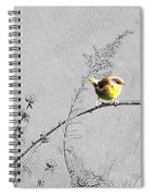 Female Yellow Throat On Gray Spiral Notebook