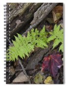 Fern And Maple Leaves Maine Img 6182 Spiral Notebook