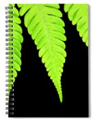 Fern Isolated On Black Background Spiral Notebook