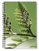 Fern Seeds Spiral Notebook