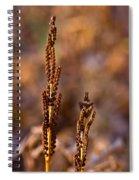 Fern Spore Stalk In Morning 2 Spiral Notebook