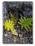 Ferns In Volcanic Rock Spiral Notebook