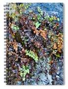 Ferns On Cliffside Spiral Notebook
