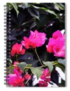 Fernwood Botanical Garden Bougainvillea Niles Michigan Usa Spiral Notebook