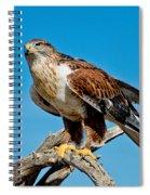 Ferruginous Hawk About To Take Spiral Notebook