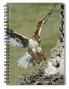 Ferruginous Hawk And Chicks Spiral Notebook