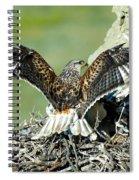 Ferruginous Hawk Male At Nest Spiral Notebook