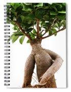 Ficus Ginseng Spiral Notebook