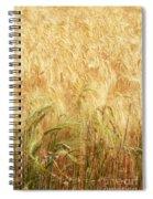 Field Of Gold - 3 Spiral Notebook
