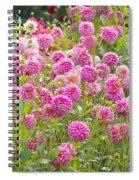 Field Of Pink Dahlias Spiral Notebook