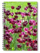 Field Of Purple Tulips 1 Spiral Notebook