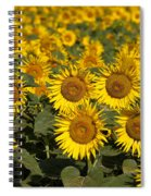 Field Of Sunflowers Spiral Notebook